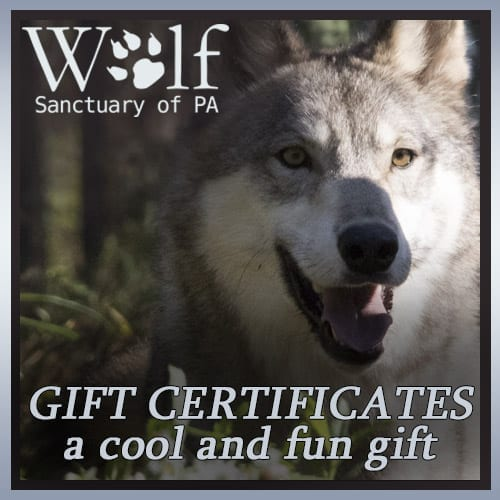 Gift Certificates Wolf Sanctuary PA
