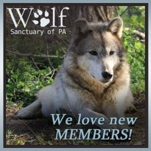 Membership - an excellent way to support the Wolf Sanctuary
